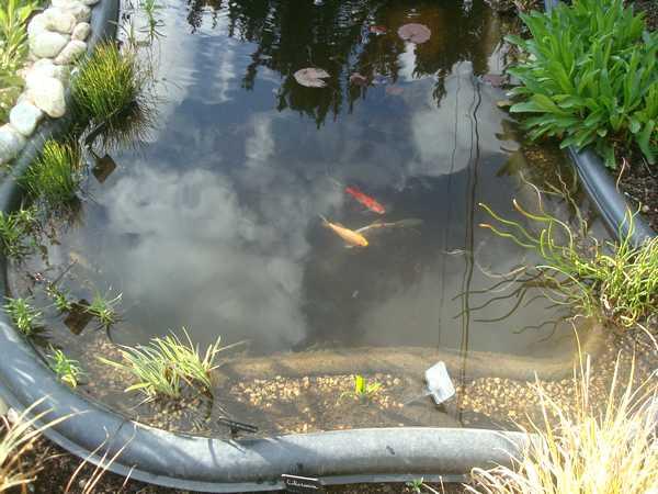 Les bassins Dsc05731