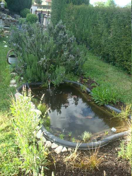 Les bassins Dsc05732