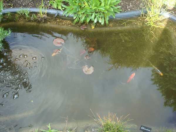 Les bassins Dsc05733