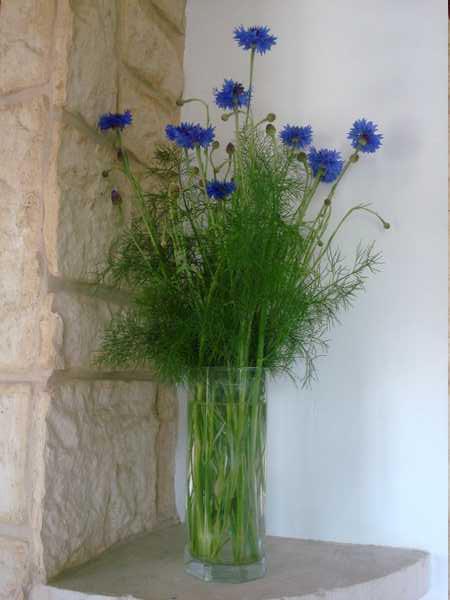 Un beau bouquet de Centaurées.... Dsc05836