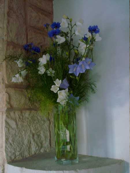 Un beau bouquet de Centaurées.... Dsc05841