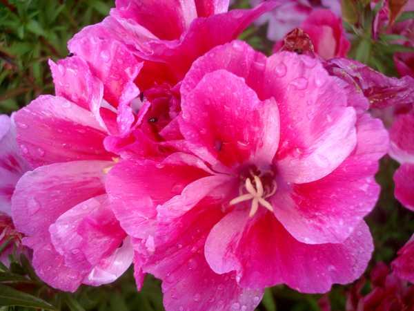 Fleurs variées Dsc05977