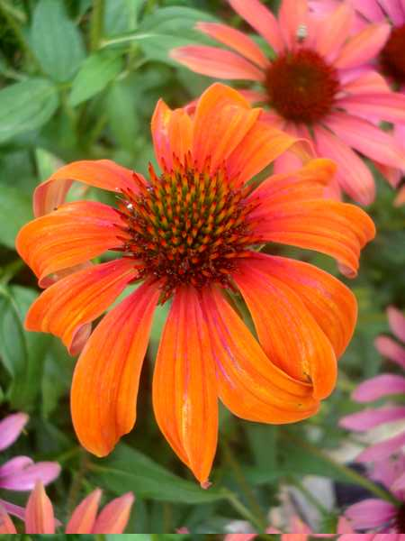 Fleurs variées Dsc06163