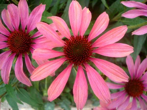 Fleurs variées Dsc06164