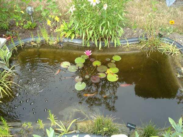 Les bassins Dsc06257