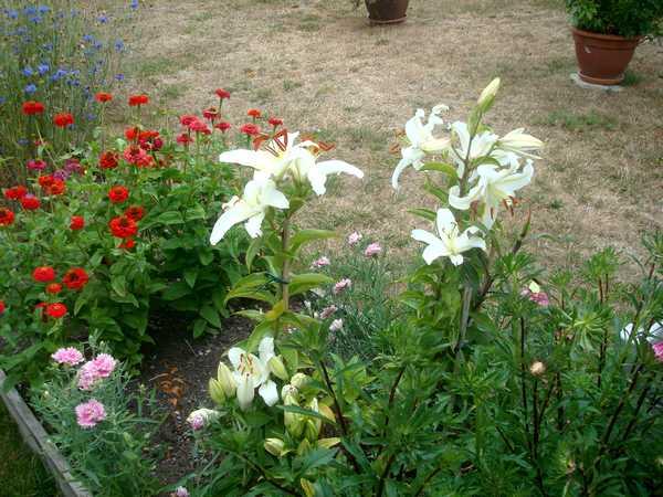 """Un jardin """"A la française""""... Dsc06259"""