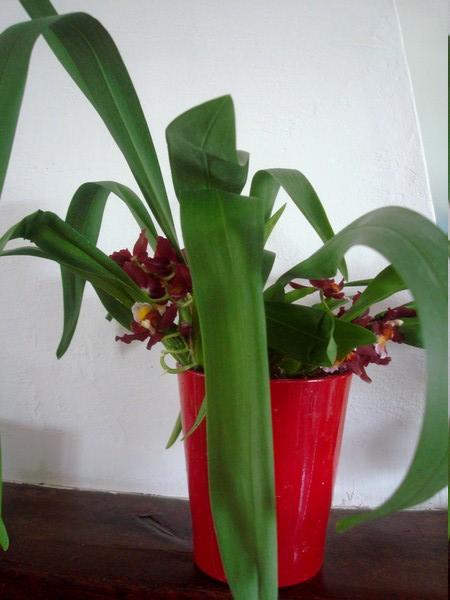 Mes orchidées démarrent bien 2021... Dsc08452