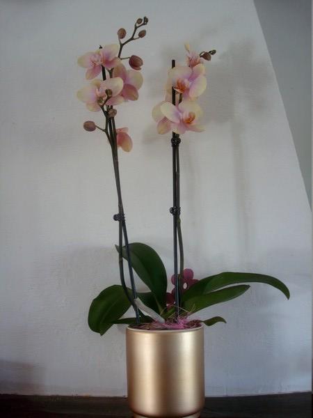 Mes orchidées démarrent bien 2021... Dsc08455
