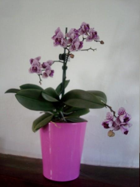 Mes orchidées démarrent bien 2021... Dsc08460
