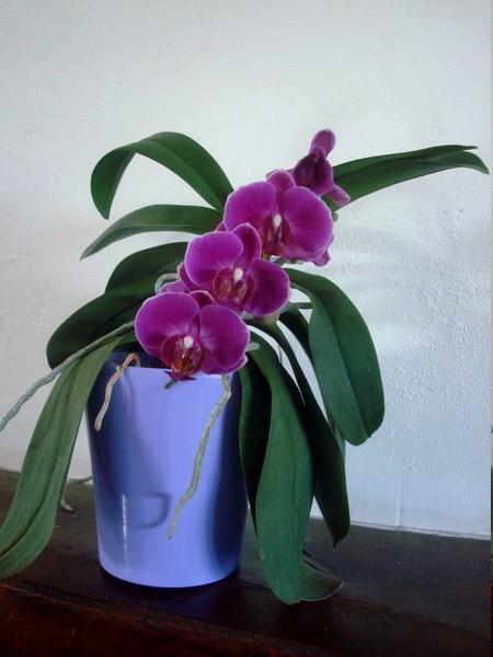 Mes orchidées démarrent bien 2021... Dsc08462
