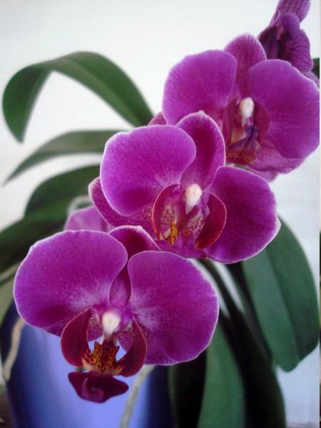 Mes orchidées démarrent bien 2021... Dsc08463