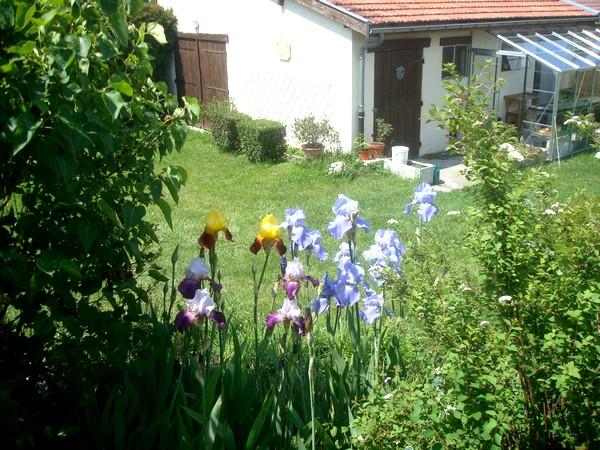 Les iris : un régal pour les yeux ! Dsc08866