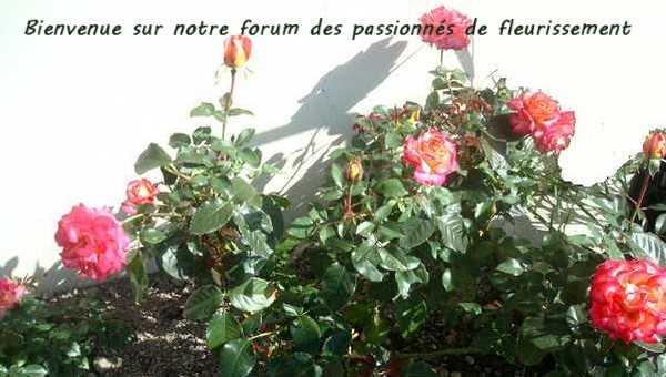 JARDINS FLEURIS Image_13