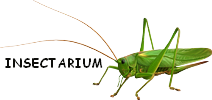 Zoomanager Insect10