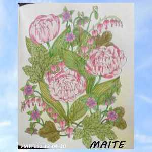 Staedler  crayon aquarellable  Maitzo27
