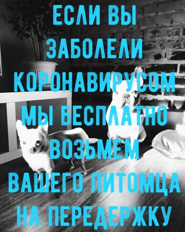 Коронавирус: Москва. Карантин 1811