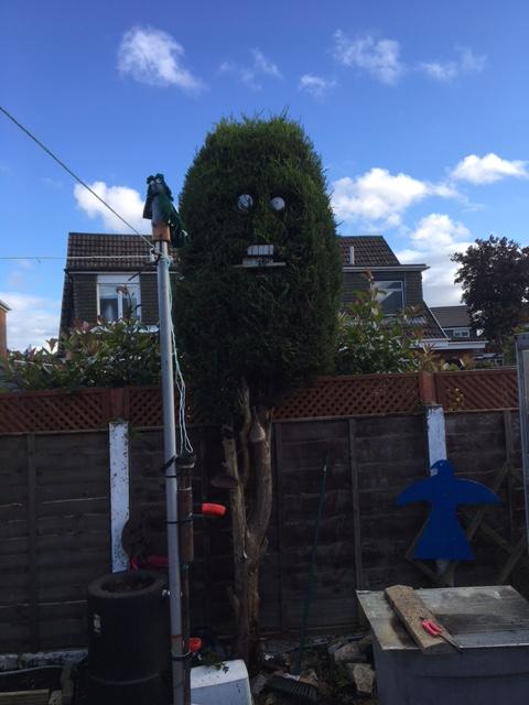 time to trim the bush Hedge_10