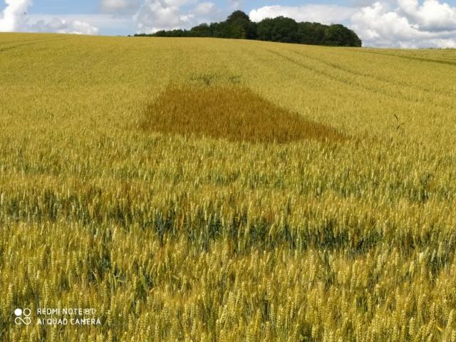 suivis blé 2020 - Page 5 Img_2361