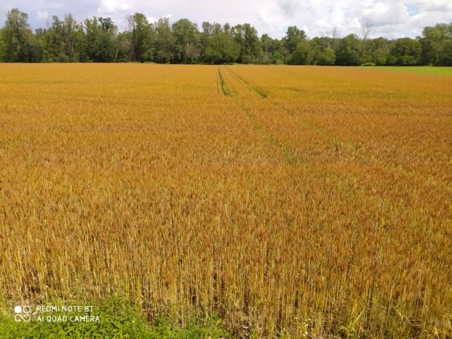 suivis blé 2020 - Page 5 Img_2362