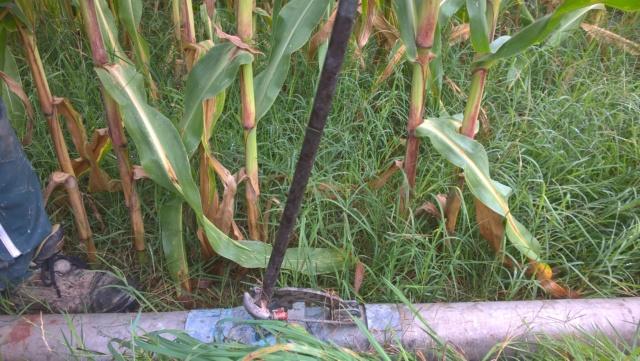 Irrigation 2020 Wp_20296