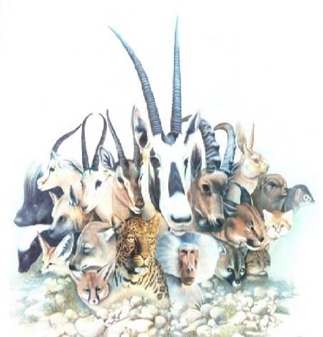 مجلة منتدى عالم الطبيعة والكائنات الحية