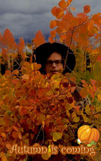 Matthew Gray Gubler - Avatars 200x320 pixels 15725410