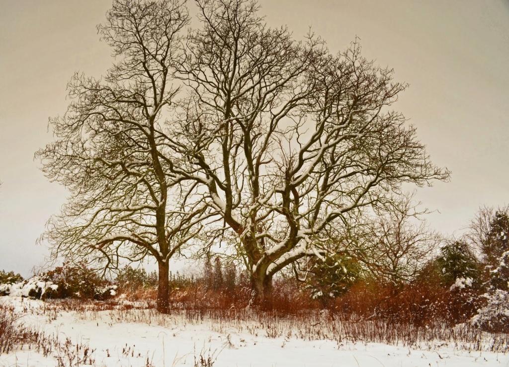 Zimski pejzaži-Winter landscapes - Page 6 014_ed10