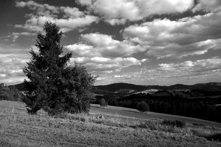 priroda u crno beloj boji - Page 24 0510