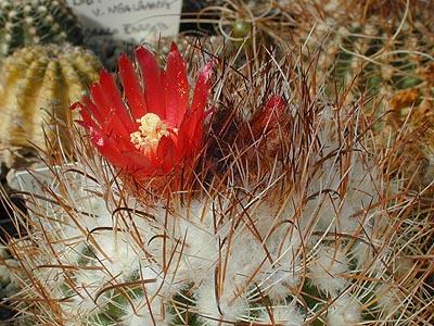 Kaktusi - Page 36 11451310