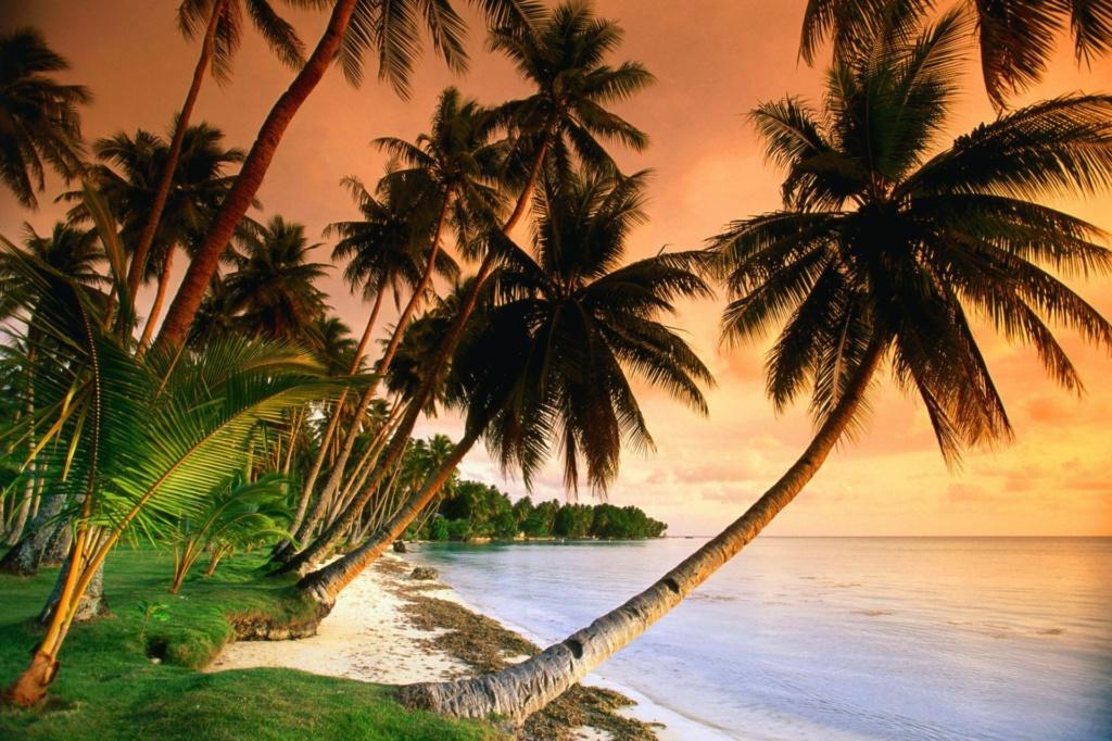 More,jezero,reka...plaža,palma... - Page 29 12797910