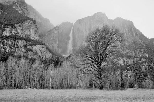 priroda u crno beloj boji - Page 23 13351410