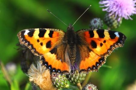 Leptiri i ostali insekti - Page 3 163