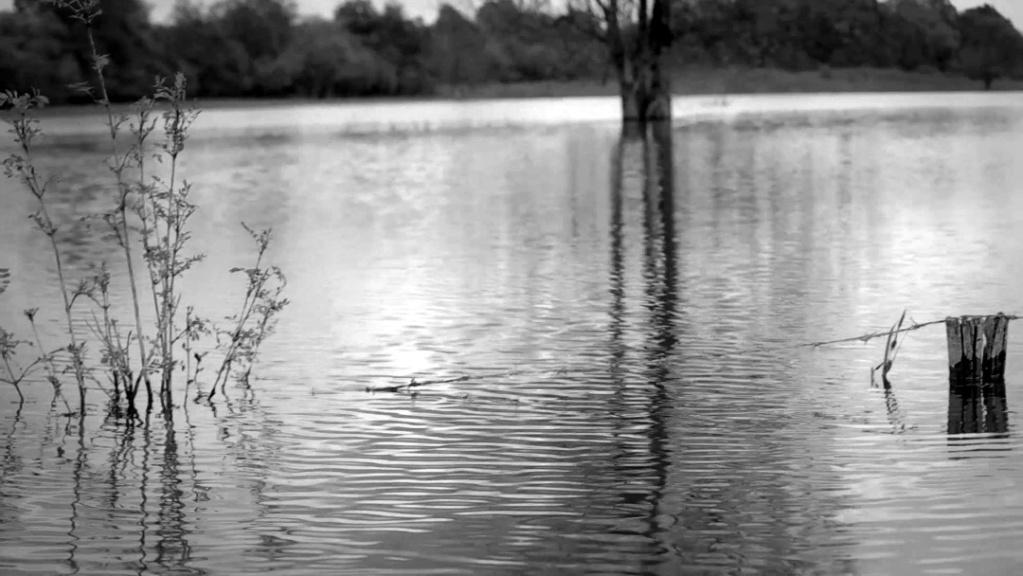 priroda u crno beloj boji - Page 24 18489910