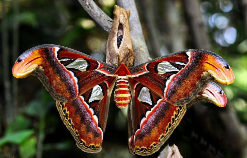 Leptiri i ostali insekti - Page 3 1d710610