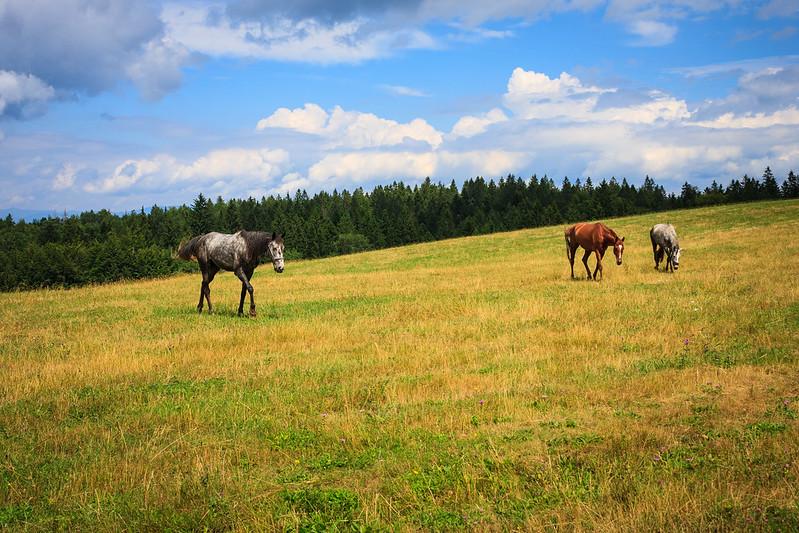 Landscape-pejzaži - Page 24 20313210