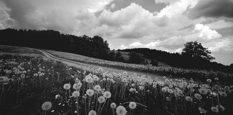 priroda u crno beloj boji - Page 24 207-kr10
