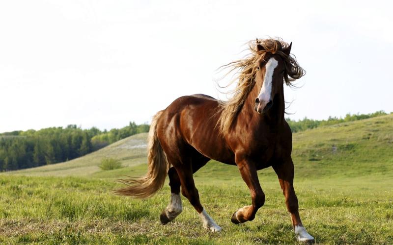 Konji vrani.. - Page 2 2096710
