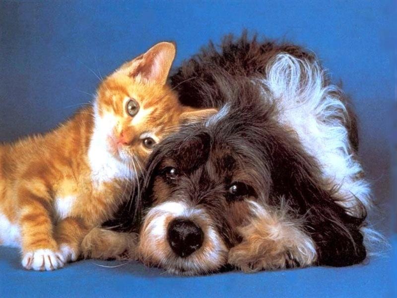 Psi i macke - Page 2 21520310