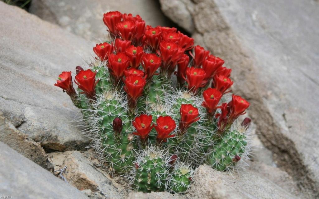 Kaktusi - Page 37 24708010