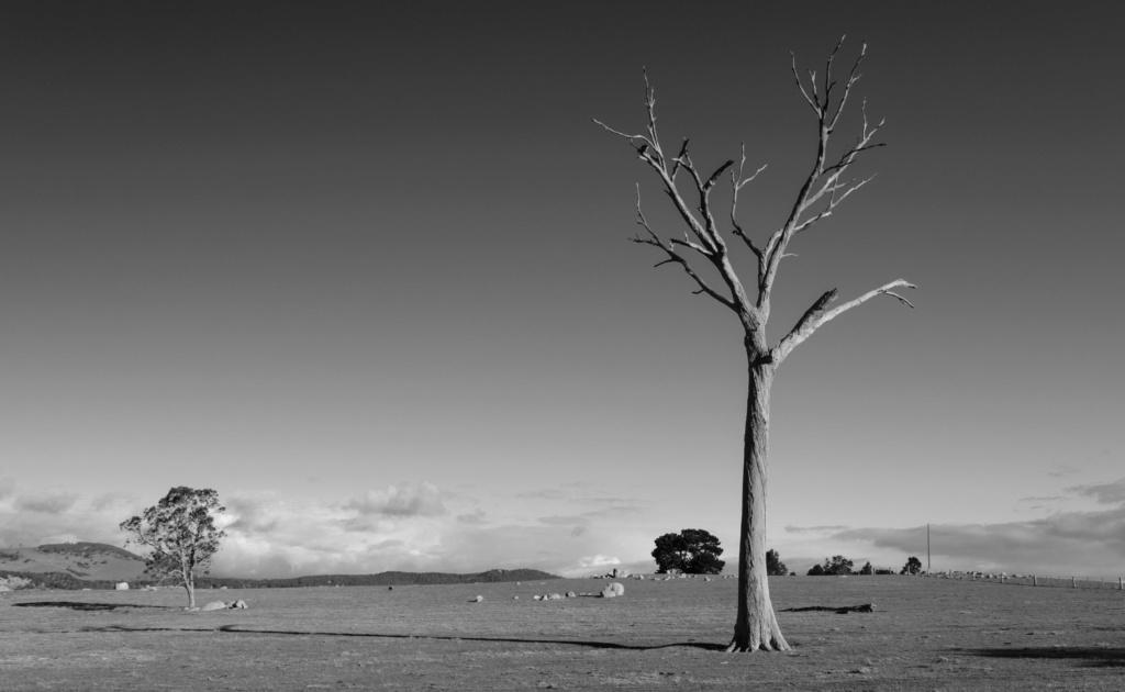 priroda u crno beloj boji - Page 23 25810