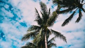 More,jezero,reka...plaža,palma... - Page 34 258310