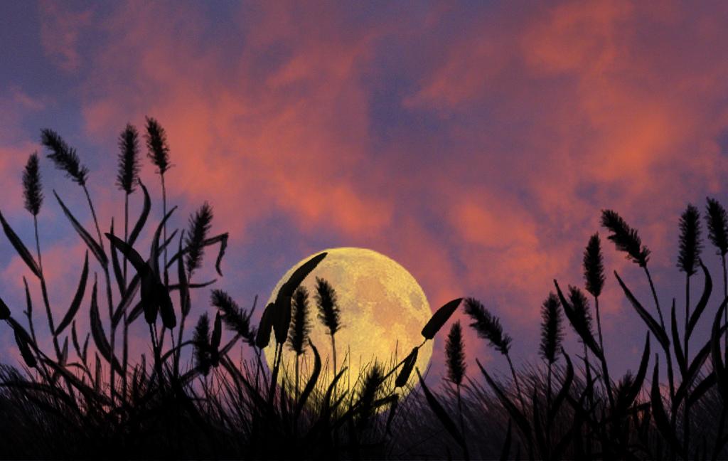 Mesečina - Page 41 28188510