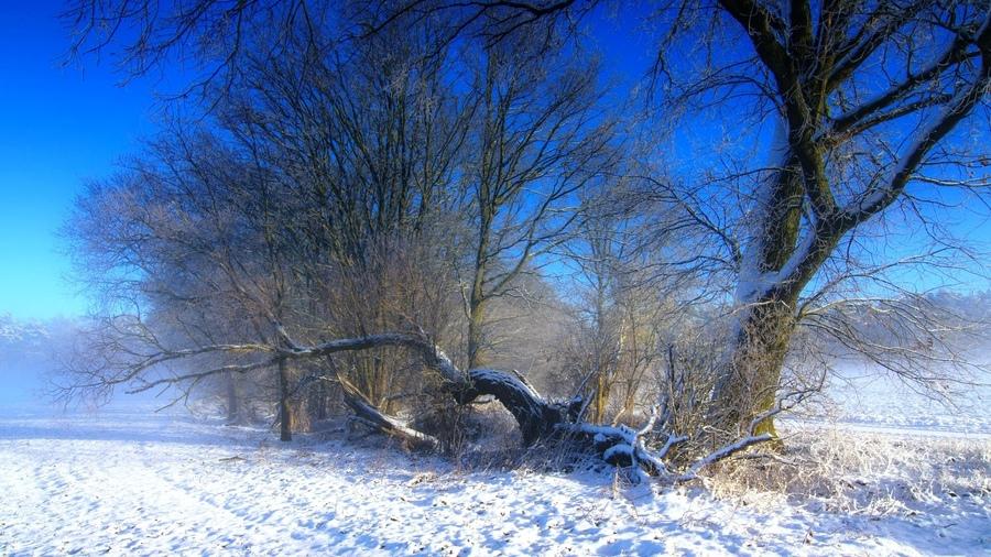 Zimski pejzaži-Winter landscapes - Page 4 28577910