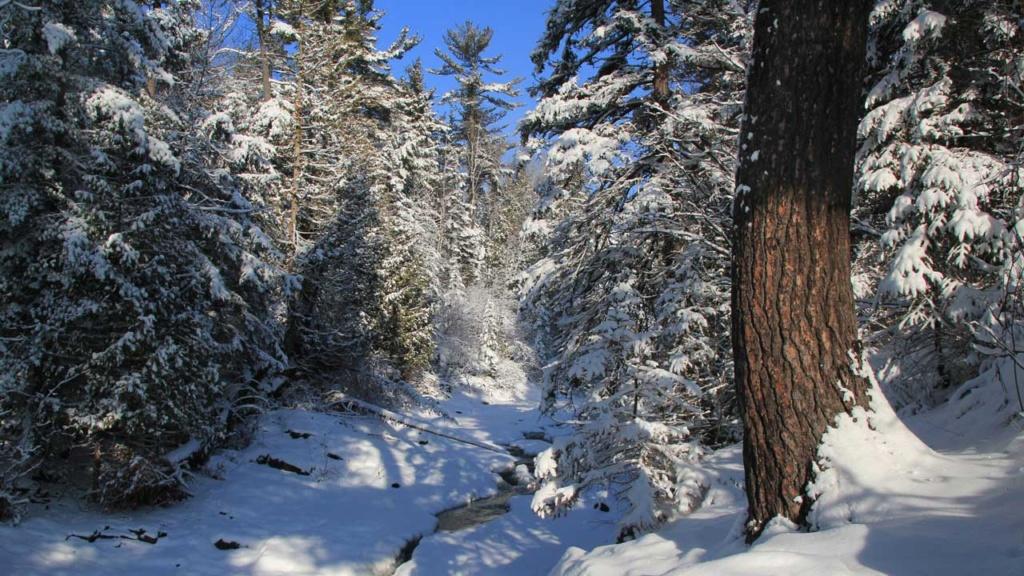 Zimski pejzaži-Winter landscapes - Page 6 2fmedi10