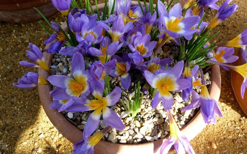 Cveće - Page 31 31186610