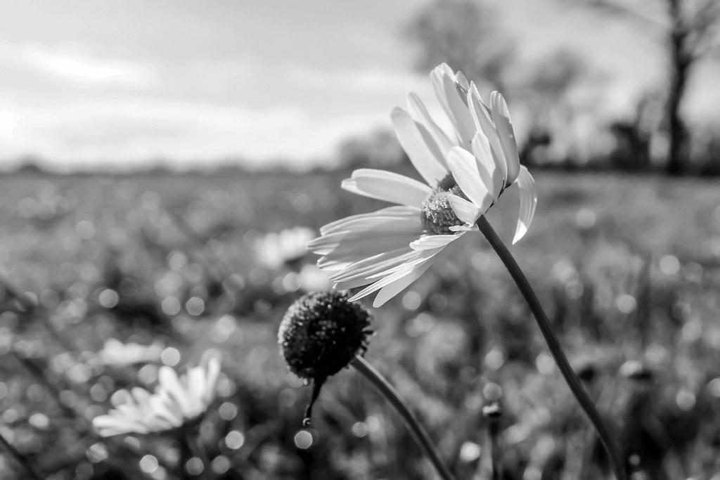 priroda u crno beloj boji - Page 24 31907810