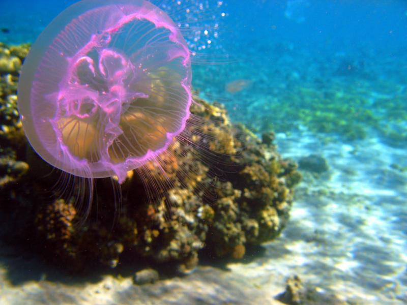 Podvodni svet (osim riba) - Page 11 36813410