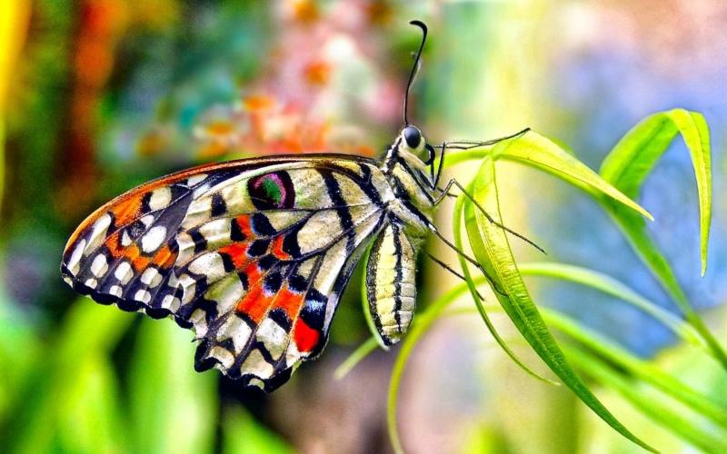 Leptiri i ostali insekti - Page 3 39993010
