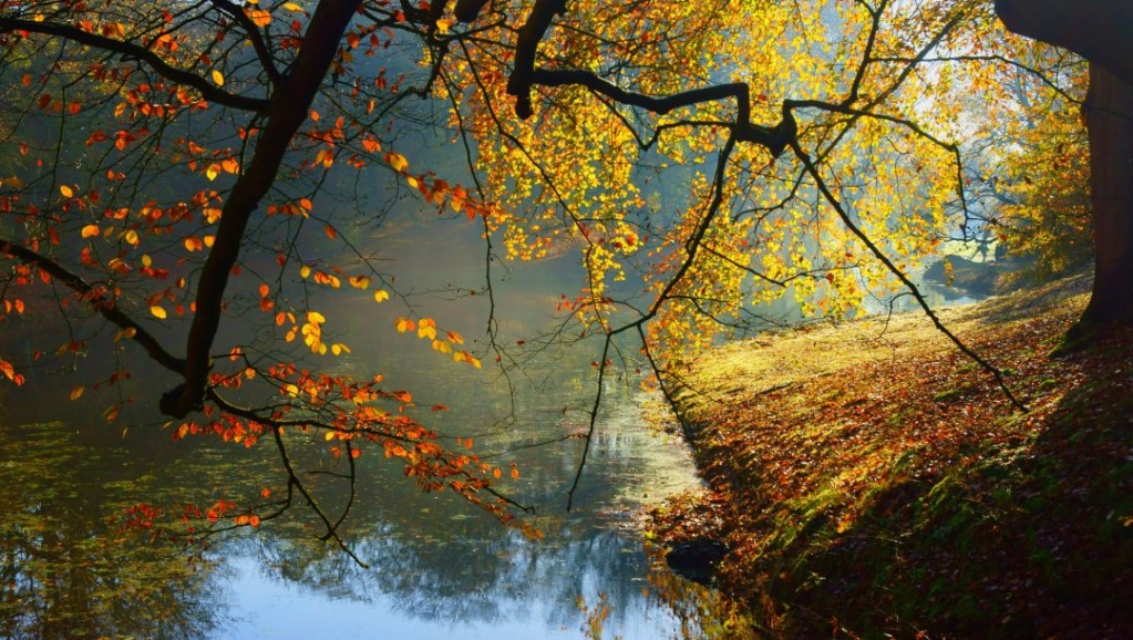 Landscape-pejzaži - Page 21 40987f10