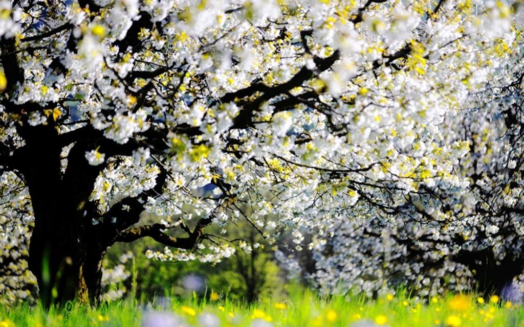 Proleće - Page 22 43037110